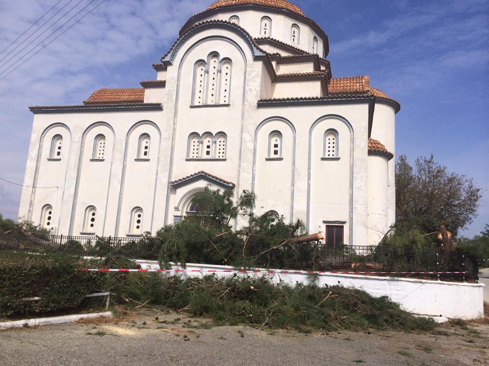Εκκλησία Πέπλου - κομμένα κωνοφόρα δέντρα τη Δευτέρα 6/10/2014 το πρωί