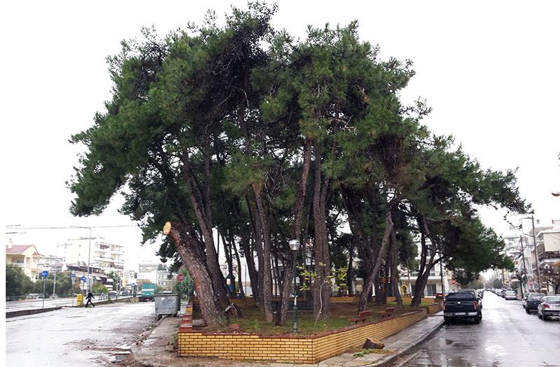 Άλσος Παπαναστασίου & Πατριάρχου Κυρίλλου (14/11/2014 16:00)