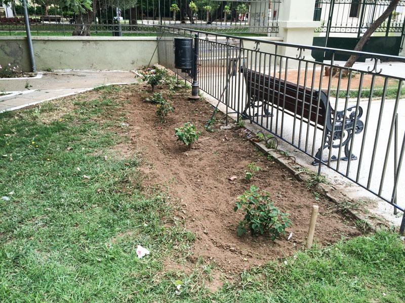 Ο κήπος του 1ου Πρότυπου Πειραματικού Δημοτικού Σχολείου Αλεξανδρούπολης (22/6/2015)